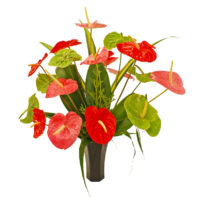 HawaiisFlowers_Anthuriums