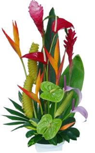 Exotic Hawaiian Mixes