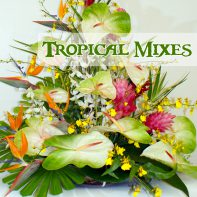 Tropical Mixes