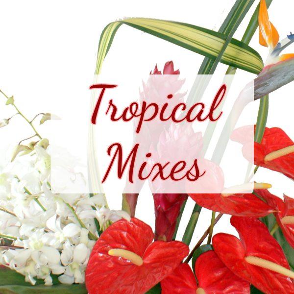 Tropical Mixes